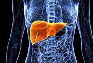Профилактика при заболевании печени и желчного пузыря